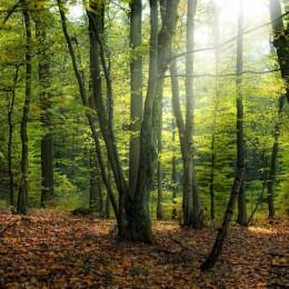 Cursos de gestió forestal, prevenció d'incendis i altres riscos per a projectes i comunitats